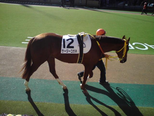 東京1レースの2頭。。。