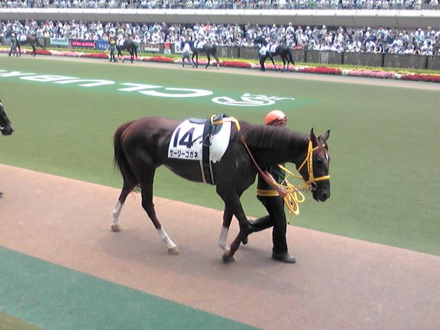 東京5レースのパドック。。。