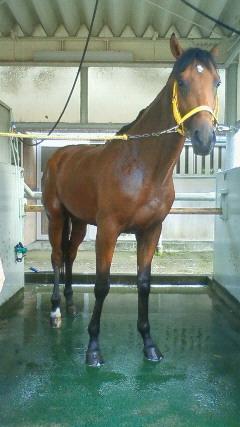 たった今、入厩したてホヤホヤの2歳馬です。