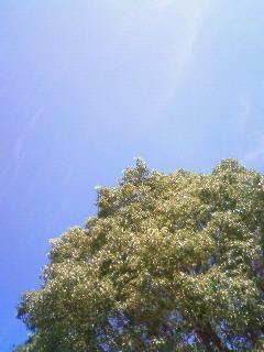 いいお天気だ。。。